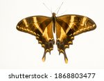 Mixed Color Butterfly On Black...