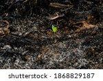 Subsistence Farmers Burn Small...