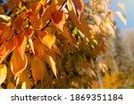 autumn background. autumn tree... | Shutterstock . vector #1869351184