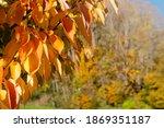 autumn background. autumn tree... | Shutterstock . vector #1869351187