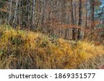 view on colorful autumn trees... | Shutterstock . vector #1869351577