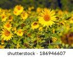 sunflower field at sunset ... | Shutterstock . vector #186946607