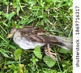 Macro Photo Dead Sparrow. Stock ...