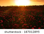 poppies at sunset | Shutterstock . vector #187012895