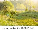 forest glade with path and... | Shutterstock . vector #187059545