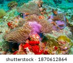 Close Up Underwater Foto Clown...