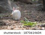 Close Up Cutie Rabbit In Wat...