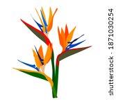 strelitzia orange tropical...   Shutterstock .eps vector #1871030254