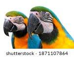 Blue Yellow Two Macaw Bird Head ...