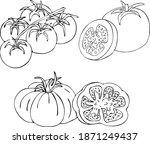 tomato. large round tomato. set ... | Shutterstock .eps vector #1871249437