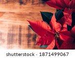 Christmas Poinsettia In Ceramic ...