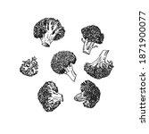 hand drawn illustration of... | Shutterstock .eps vector #1871900077