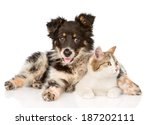 Stock photo mixed breed dog and cat looking away isolated on white background 187202111