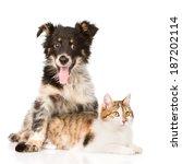 Stock photo dog hugging cat isolated on white background 187202114