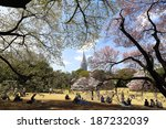 japanese cherry blossom | Shutterstock . vector #187232039