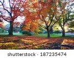 japan kyoto maple | Shutterstock . vector #187235474