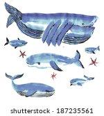 blue whales   Shutterstock . vector #187235561