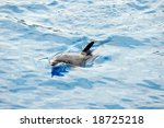 happy dolphin swimming | Shutterstock . vector #18725218