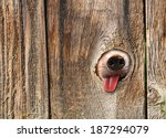 A Cute Dog's Nose And Tongue...