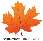 A Yellowed Sycamore Leaf...