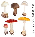 Set Of Poisonous Fly Agaric...