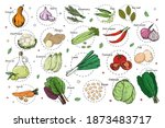 sketch of different vegetables. ... | Shutterstock .eps vector #1873483717