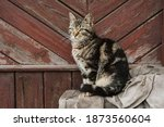 country cat sitting on the...   Shutterstock . vector #1873560604