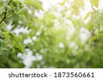 abstract natural background...   Shutterstock . vector #1873560661