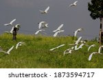 Stork Is The Name For Birds...