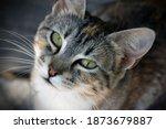 Cute Cat Face Close Up Shot...