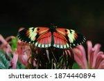 Butterflies At A Butterfly...