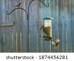 Birds On A Feeder In The...
