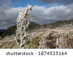 Icy Tree On The  Summit Of...