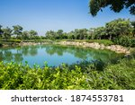 Lily pond in summer park....