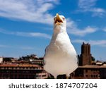 Seagull In Front Of The Camera. ...