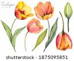 Spring Flowers. Yellow Tulips...
