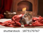 Christmas Cat On A Red Plaid At ...