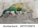 Graphic Drawn Chameleon On Grey ...