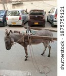 A Donkey In Cart With Harness...