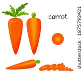 raw carrots with tops. whole ... | Shutterstock .eps vector #1875792421