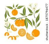 mandarin set. exotic tropical... | Shutterstock .eps vector #1875796477
