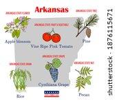 arkansas. set of usa official...   Shutterstock .eps vector #1876115671
