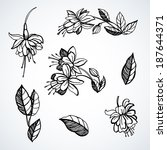 Sketches Of Flowers Fuchsia.