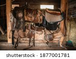 Leather Saddles  Soft Blankets  ...
