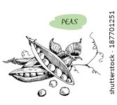 peas. set of hand drawn graphic ... | Shutterstock .eps vector #187701251