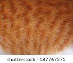 Orange Cat Fur.thai Cat Fur...