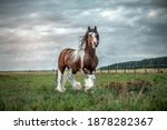 Beautiful Tinker Horse With...