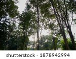 Sunlight In The Green Forest In ...