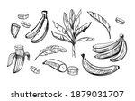 banana sketch set. black... | Shutterstock .eps vector #1879031707