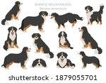 bernese mountain dog... | Shutterstock .eps vector #1879055701